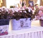 Кашпо для цветов купить: оригинальные идеи для любимых комнатных растений