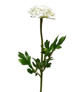 """Искусственный цветок """"Ранункулус белый"""""""